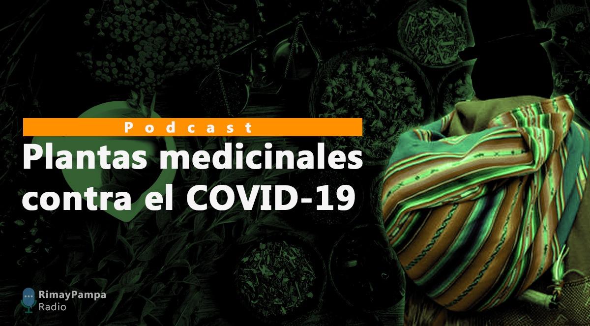 Doña Pastora y don Jorge toman plantas medicinales  para cuidarse del Covid-19