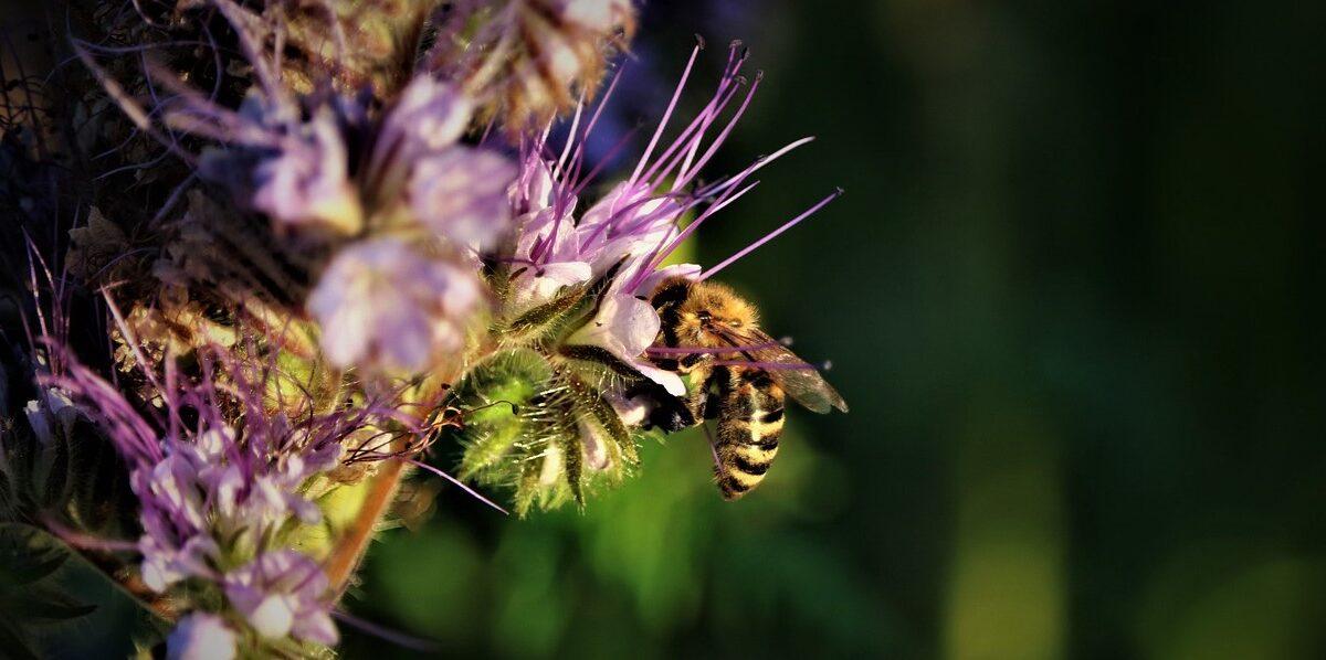 Para evitar perder fauna, debe cambiar la producción y el consumo