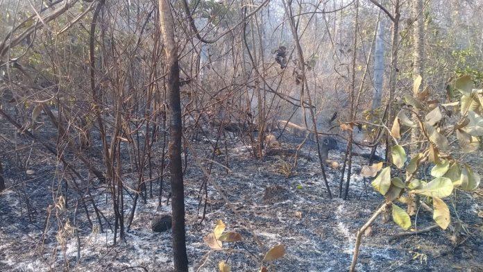 Incendios afectan a los territorios indígenas de Lomerío y Monte Verde