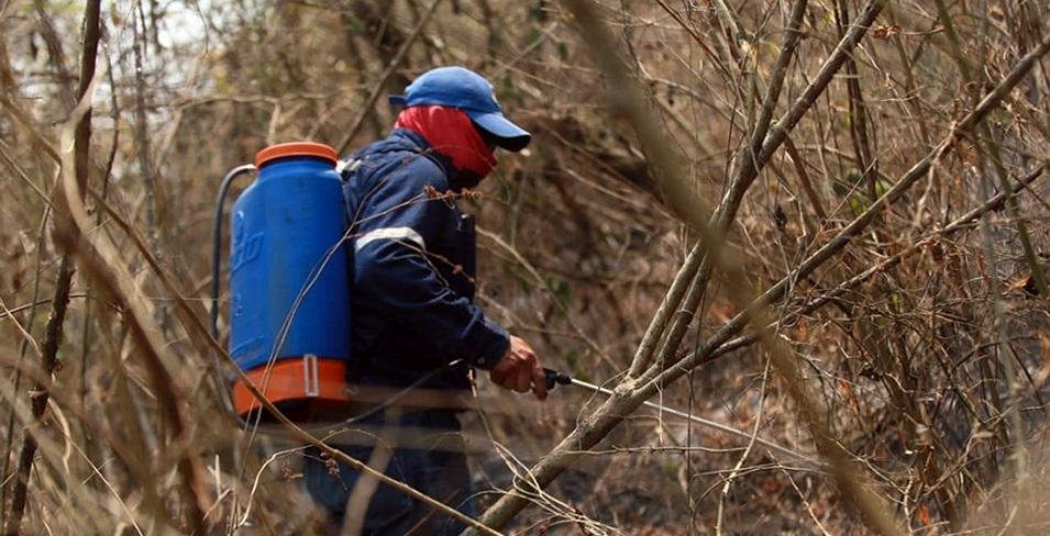 CIPCA: Hasta el 1 de octubre se quemaron 3740 hectáreas de bosque chaqueño