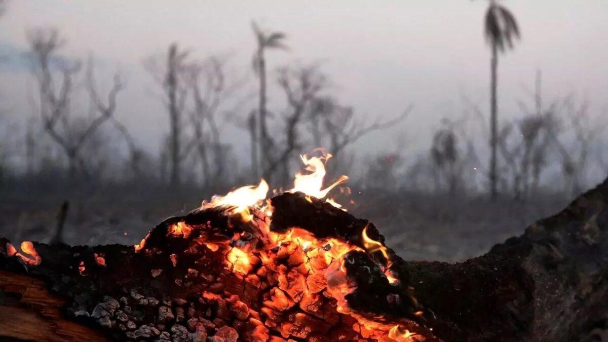 Los incendios forestales afectaron a las comunidades en su capital natural, financiero y político