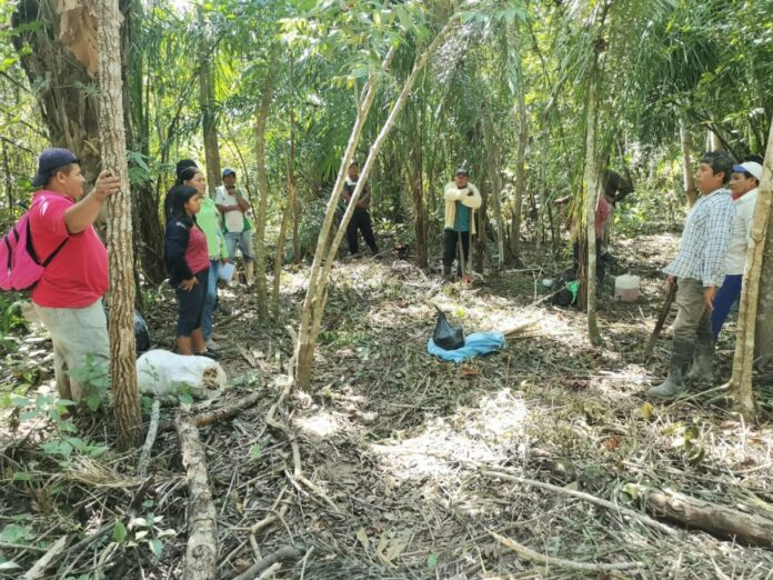 Indígenas del Beni se forman en peritaje de agroforestería sucesional