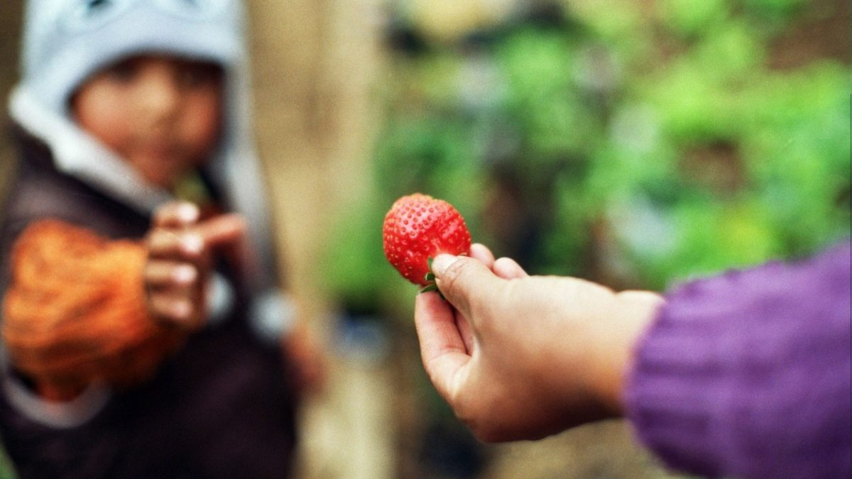 Agricultura urbana y periurbana: Una oportunidad para el consumo responsable