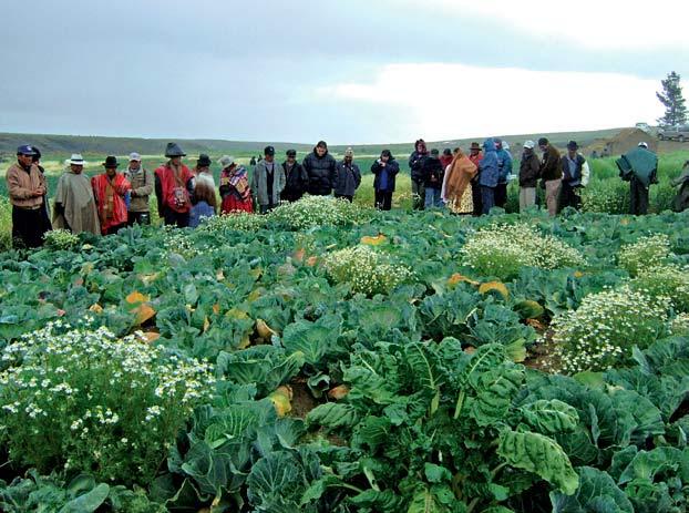 Sociedad civil paceña plantea la agroecología como alternativa ante el fracaso del actual modelo de producción en el país