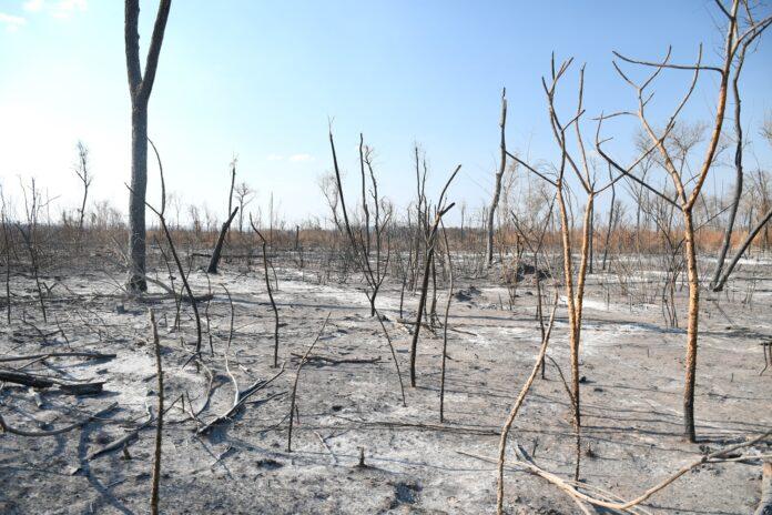 CEJIS: Agosto registra 53.073 focos de calor acumulados